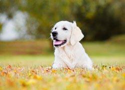 L'ICAD : identification des animaux domestiques